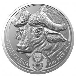 Büffel - Big Five Südafrika...